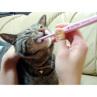 シグワン 超小型犬用 歯ブラシ