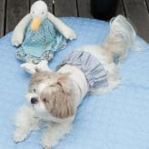 ルイスドッグ【louisdog】Play Couture