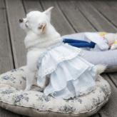 ルイスドッグ【louisdog】Girl's Blouse