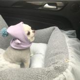ルイスドッグ【louisdog】Driving Kit/TUTU