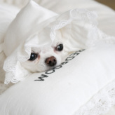 ルイスドッグ【louisdog】Sweet Dream Pillow