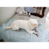 ルイスドッグ【louisdog】White Organic Tee