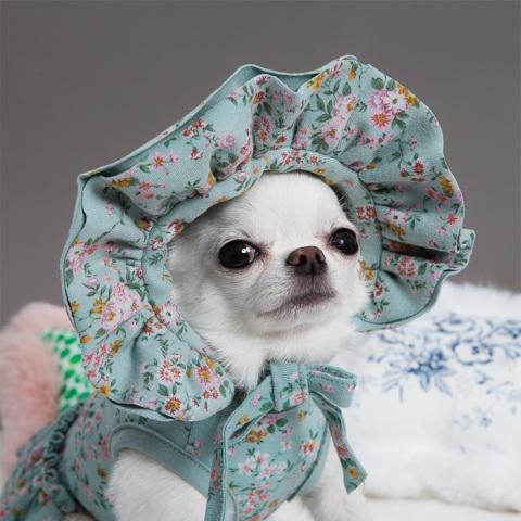 ルイスドッグ【louisdog】My Bonnet