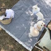 ルイスドッグ【louisdog】Picnic Mat