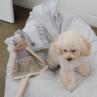 ルイスドッグ【louisdog】Vintage Floral Mini Pillow