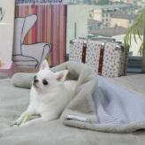 ルイスドッグ【louisdog】Winter Magic Blanket/Green Lily Fur n Seersucker