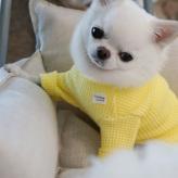 ルイスドッグ【louisdog】Waffle Tee
