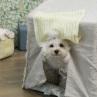 ルイスドッグ【louisdog】BOHO Peekaboo/BOHO Peekaboo/Natural/Grand