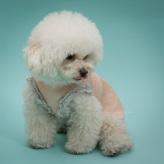 ルイスドッグ【louisdog】Creamy Frill Sleeveless Tee/Buttercream