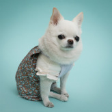 ルイスドッグ【louisdog】Creamy Frill Sleeveless Tee/Baby Powder
