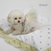 ルイスドッグ【louisdog】Healing Cushion/Grand