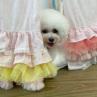 ルイスドッグ【louisdog】Peekaboo Couture/Tropea/Grand