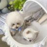 ルイスドッグ【louisdog】Baby Cradle