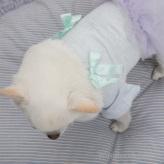 ルイスドッグ【louisdog】Ballet Club Oragnic TUTU/Silk Ribbon/Lavender TUTU