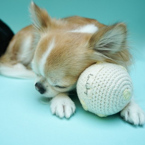 ルイスドッグ【louisdog】Cotton Ball/Organic Natural